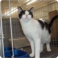 Adopt A Pet :: Ruby Dee-Light - McDonough, GA
