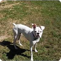 Adopt A Pet :: Porter - Albany, GA