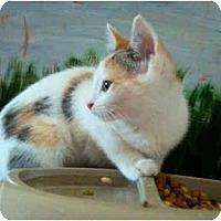 Adopt A Pet :: Starry - Colmar, PA