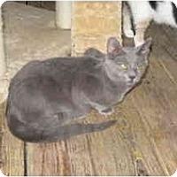 Adopt A Pet :: Thunder - Clay, NY
