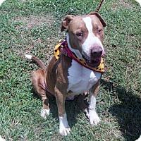 Adopt A Pet :: Nellie - Paducah, KY