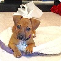 Adopt A Pet :: Nina - Alpharetta, GA