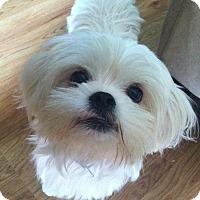 Adopt A Pet :: Riley - Homer, NY