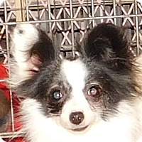 Adopt A Pet :: Fable - MINNEAPOLIS, KS