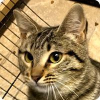 Adopt A Pet :: Hope - Winchester, CA