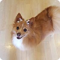 Adopt A Pet :: Tessa - El Cajon, CA