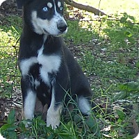 Adopt A Pet :: Morri - Hartford, CT