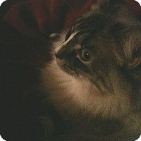 Adopt A Pet :: Elle - Dallas, TX