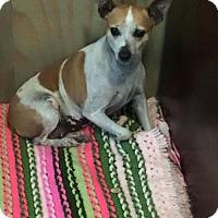 Adopt A Pet :: Delta - Longview, TX