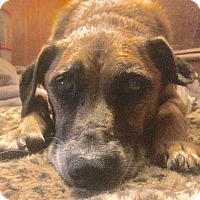 Adopt A Pet :: Zappa- Gentle Senior! - Oak Ridge, NJ