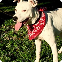 Adopt A Pet :: Freckles - Tampa, FL