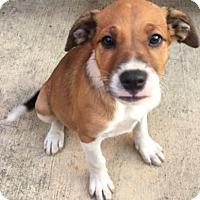 Adopt A Pet :: Jubilee - Tenafly, NJ