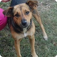Adopt A Pet :: Sandi - Manning, SC