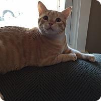 Adopt A Pet :: Sunny - Horsham, PA