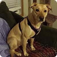 Adopt A Pet :: Josie - Iroquois, IL