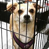 Adopt A Pet :: Ivy - Pembroke, GA