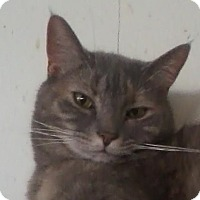 Adopt A Pet :: Serafina - Watsontown, PA
