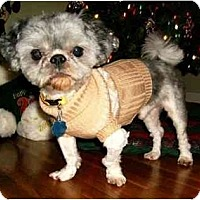 Adopt A Pet :: Duncan - Mooy, AL