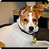 Adopt A Pet :: Arlo - Tempe, AZ