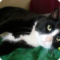 Adopt A Pet :: Buddy - N. Berwick, ME