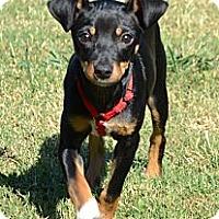 Adopt A Pet :: *Aggie - PENDING - Westport, CT