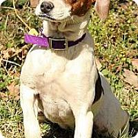Adopt A Pet :: Nadia - Brattleboro, VT