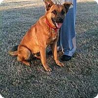 Adopt A Pet :: Blue Knox - Southampton, PA
