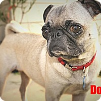 Adopt A Pet :: Dotty - Austin, TX