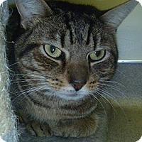 Adopt A Pet :: Burlington - Hamburg, NY