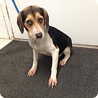Adopt A Pet :: Emmy - Lancaster, VA