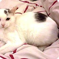 Adopt A Pet :: Meriweather - Orange, CA