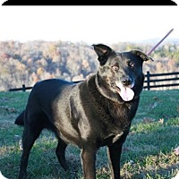 Adopt A Pet :: Marley - La Follette, TN