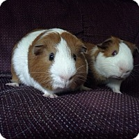 Adopt A Pet :: Shiloh & Charlie - San Antonio, TX