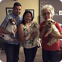 Adopt A Pet :: JJ - Sacramento, CA