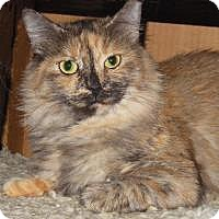 Adopt A Pet :: Snickers - Mission Viejo, CA