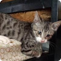 Adopt A Pet :: CHIP - Ridgewood, NY
