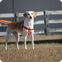 Adopt A Pet :: Karina - Pinehurst, NC