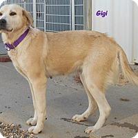 Adopt A Pet :: Gigi - Oskaloosa, IA