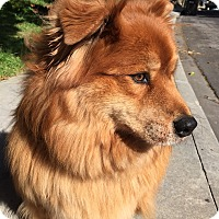 Adopt A Pet :: Pepper - San Francisco, CA