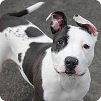 Adopt A Pet :: SIMON - Clayton, NJ