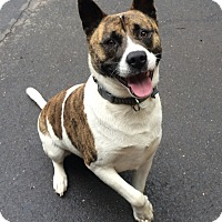 Adopt A Pet :: Pumba in CT - Manchester, CT