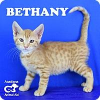 Adopt A Pet :: Bethany - Carencro, LA