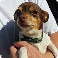 Adopt A Pet :: Keira - Spanish Fork, UT