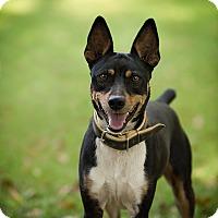 Adopt A Pet :: Lightning - Daleville, AL