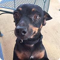 Adopt A Pet :: Roo - Ogden, UT
