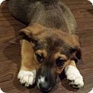 Adopt A Pet :: Karma