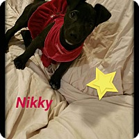 Adopt A Pet :: Nikky - LAKEWOOD, CA