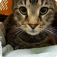 Adopt A Pet :: Goonie - Chicago, IL