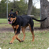 Adopt A Pet :: Lucille - Lake Jackson, TX