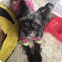 Adopt A Pet :: Luke - Middletown, OH